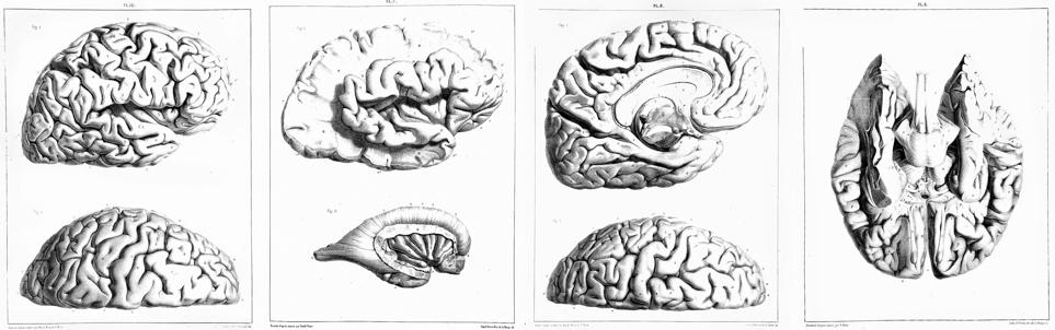 ortografia etimologia celebrale cerebrale errore